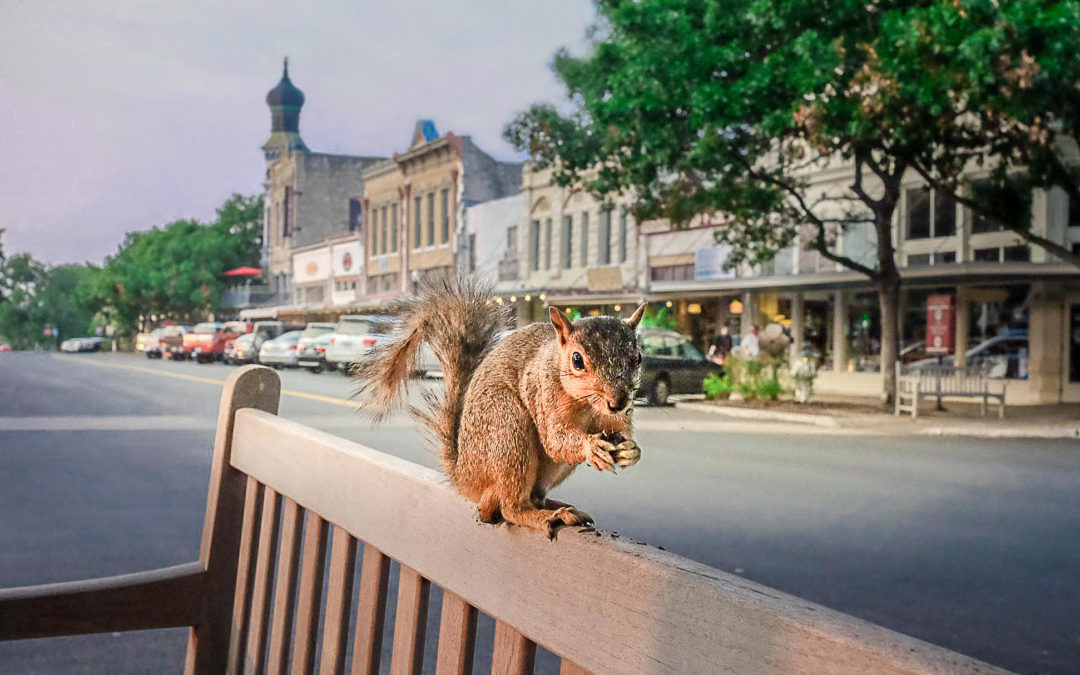 Squirrel on the Square